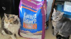 Nutmeg and Smokey with their favorite formula! (Facebook fan photo from Joyce Holtz)