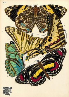 Seguy - Papillons (5)