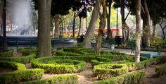 Centro de Coyoacán en la Ciudad de México. / Foto: elfidomx // Coyoacan Park  @ Mexico City