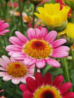✯ I had a row of zinnias last summer and they are so brilliantly colored and lovely