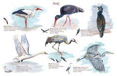 Pet Birds, Flora, Science, Education, School, Animals, Animales, Animaux, Schools