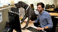 The sound of a dog barking has been enough to break the ice during a tense conversation in the office.