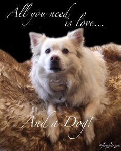 All you need is love and a dog Professional quality by 4footphoto, $20.00