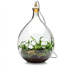 self sustaining plant in a glass jar with lamp