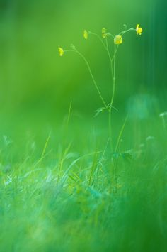 simple by Sebastian Raab on 500px