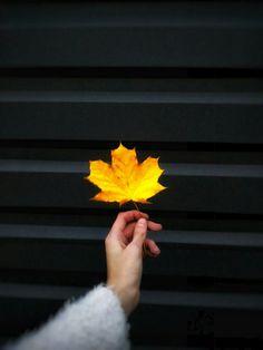 Все в этом мире закономерно,  даже осень наступает каждый год....