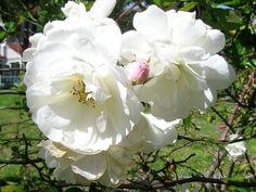 Florida flowers
