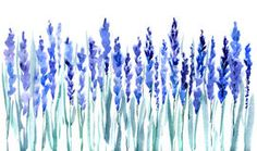 dessins de fleurs de lavande - Google keresés
