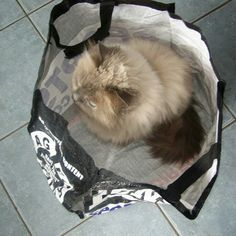 The cat's not out of the bag