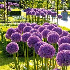 Great Interessante Blumenzwiebel Mischung in Pastellfarben f r die Etagen Bepflanzung Gefunden auf tom garten de Pinterest