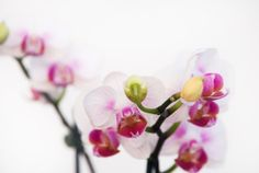Orchid N2 8x10 Fine Art Photographic Natural by MilesOfLight, $30.00