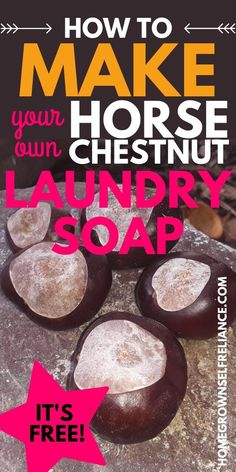 Did you know that you can make your own all-natural, waste-free laundry soap....for free? That's right! If you have a Horse Chestnut tree nearby, you can make your family's laundry soap for absolutely no money. Find out how to make this super frugal, eco-friendly laundry soap for yourself! #nowaste #allnatural #diycleaners Diy Glass Cleaner, Diy Bathroom Cleaner, Diy Floor Cleaner, Diy Carpet Cleaner, Cleaning Recipes, Diy Cleaning Products, Cleaning Hacks, Natural Cleaners, Diy Cleaners