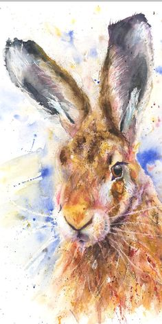 Stately hare x