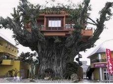 La famosa casetta sull'albero, versione oversize.