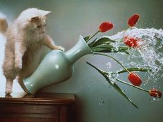 The Accidentally on Purpose: All you need for this is a cat and a very expensive vase, and you can just sit back and let nature do the rest.