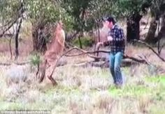 Featured Product In the rural Australian Outback, a viral video has emerged of a man waging a punching match with a large kangaroo in order to save his dog in the dangerous clutches of an aggressive animal. According to the New Zealand Herald, the video has been shared more than three million times. The person …