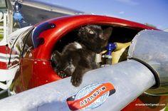 Нашли маленького авиа-техника на винте самолета #Cessna150.  We found a small air-technique in the propeller plane #Cessna150.#poletnaotlichno , #flyingaplane , #полет , #gift , #полетвподарок, #Russian, #aviation