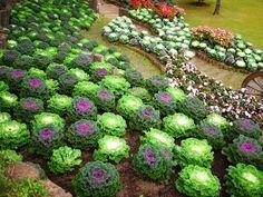 ogrody kwiatowe kompozycje - Szukaj w Google