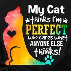 Cat Quotes, Animal Quotes, Animal Memes, Crazy Cat Lady, Crazy Cats, Cute Cats, Funny Cats, Animals And Pets, Cute Animals