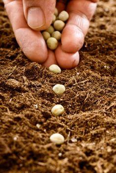 Zašto nekome smetaju naše prastare sorte voća, povrća i drugih biljaka koje kultiviramo na našoj zemlji?
