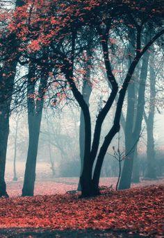 Red forest in Swarzedz, Poland / by Erik Witsoe