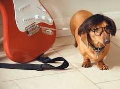 hank marvin dachshund - Google Search