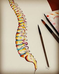 watercolour Anatomy art spine