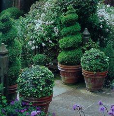 Topiaries in rustic planters. Topiaries in rustic planters. Topiary Garden, Garden Pots, Topiary Plants, Potted Plants, Evergreen Planters, Evergreen Container, Potted Garden, Easy Garden, Formal Gardens