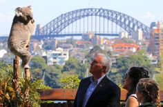 #world #news  Pence tries hand at koala diplomacy Down Under