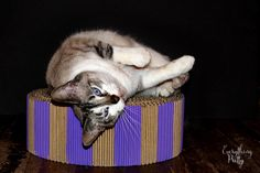 DIY Cat Bed or Scratcher out of corrugated cardboard