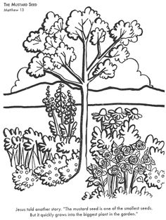 religious education coloring pages - mustard seed tree clip art parable of the mustard seed