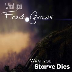 My Husband created this awesome Graphic. Love the Truth, what you feed grows, what you starve dies.