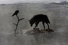 wolf and crow relationship counseling