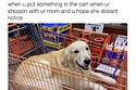 19 Memes Your Dog Will Probably Relate To