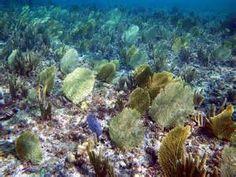 Snorkeling at Princess Cays