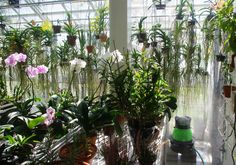 Humidity control in orchid plant house.