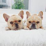 """6,105 Synes godt om, 152 kommentarer – Frenchielover (@themonster_house) på Instagram: """"!! Back to School, Pretty Gang !! ...Be the Angel, Kids..."""""""
