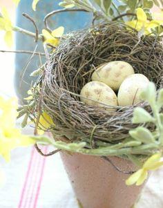 pot de fleur coiffe d un nid rempli d oeufs fleurs jaunes tres douces