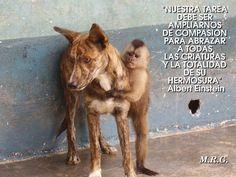 Frases de conciencia animal