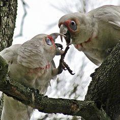 "'BOO!' ~ ""AHHHHHH....!!!!"" Birds, Friends, Animals, Image, Amigos, Animales, Animaux, Bird, Animal"
