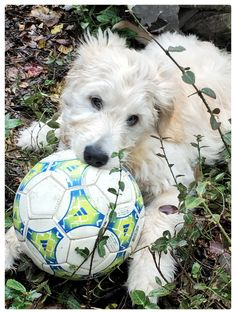 never too young to try a little soccer…Jasper at 13 weeks