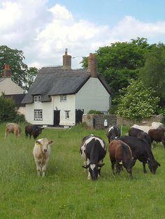 English country village scene ~ Oxfordshire