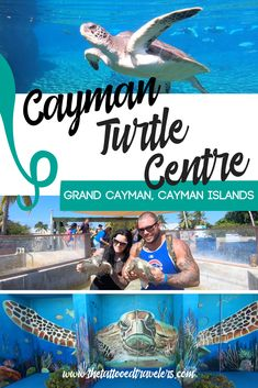 Located in Grand Cayman, the Cayman Turtle Farm is a conservation facility & education center where visitors can hold & swim Green Sea Turtles. Cruise Port, Cruise Travel, Cruise Vacation, Disney Cruise, Vacation Trips, Honeymoon Cruise, Couples Vacation, Cruise Excursions, Shore Excursions