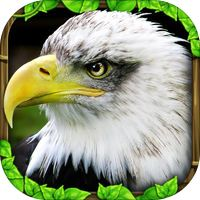 Eagle Simulator Eagle Simulator Eagle Simulator – bald eagle simulator on your android device. Start your journey right now and try to su. Animal Poems, Types Of Animals, Game App, Forest Animals, Mobile Application, Free Games, Gluten Free, Android Smartphone, Free Downloads