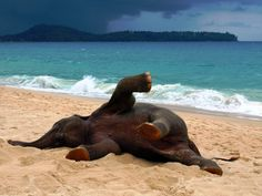 Elephant playing on the beach in Phuket, Thailand.
