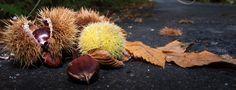 Entre brétemas.: Adiós al otoño