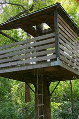 tree thru center & rope ladder