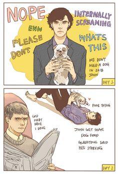John gets Sherlock a dog :P