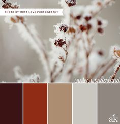 a winter-inspired color palette // brown, tan, gray // photo by Mutt Love Photography