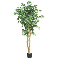 Nearly Natural 5208 Ficus Artificial Tree with Curved Trunk, 5-Feet, Green -- Read more reviews of the product by visiting the link on the image.